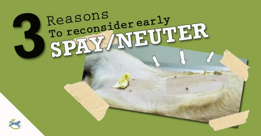 three reasons to reconsider early spay n
