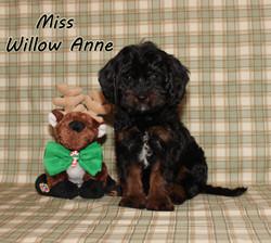 Willow ON HOLD for Kathleen K.