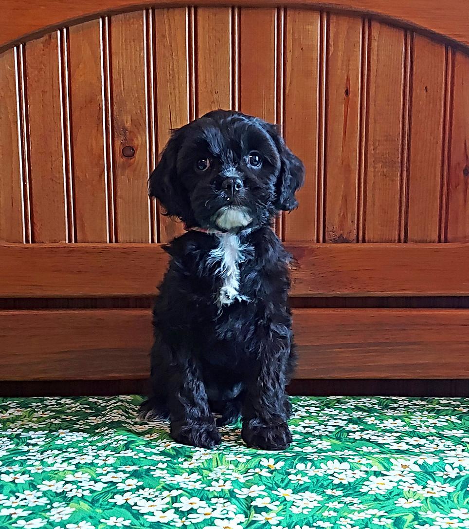 Ella -- 8 weeks old pic 1