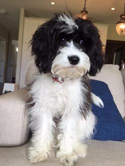Charlie from Emma X Idris Dec. 2015