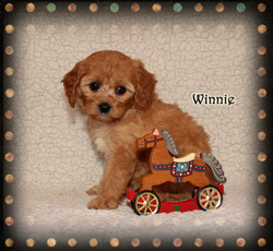 Winnie ON HOLD for Leah H.