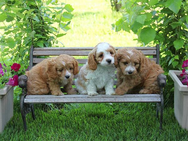 Einstein, Sadie, Marlow.jpg
