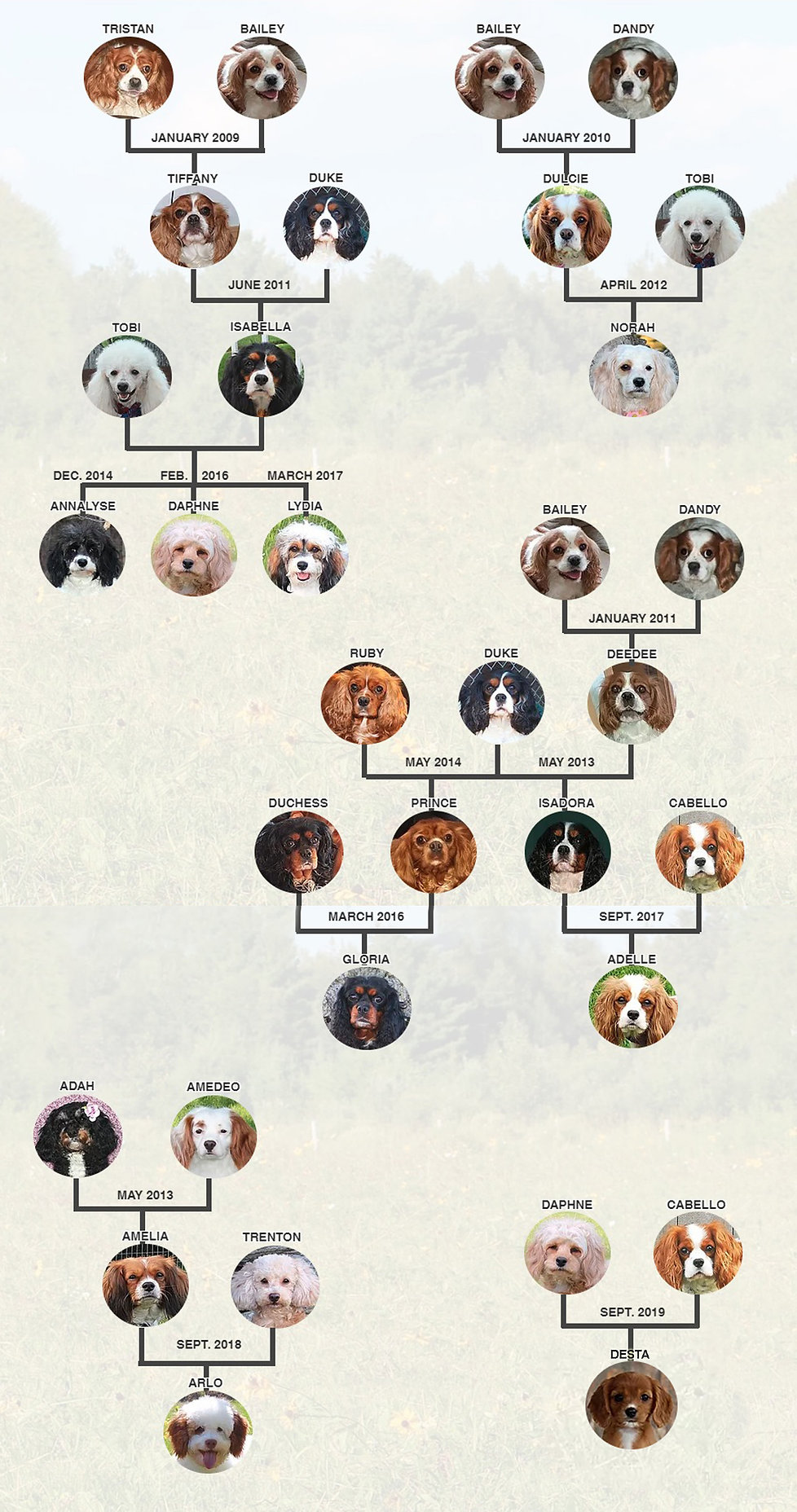 Complete Lineage 1.jpg