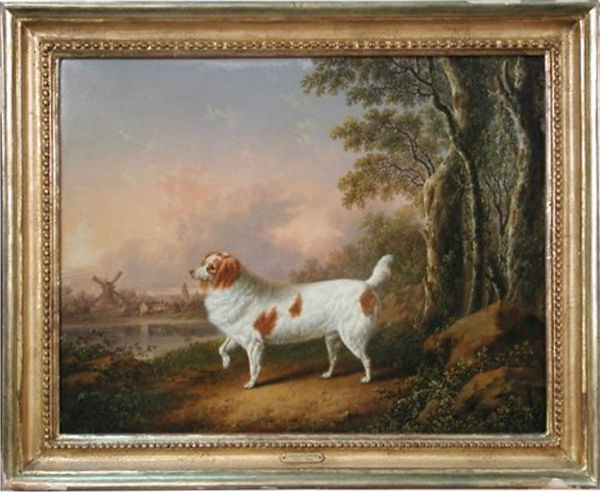 A_Marlborough_Spaniel_in_a_wooded_landsc