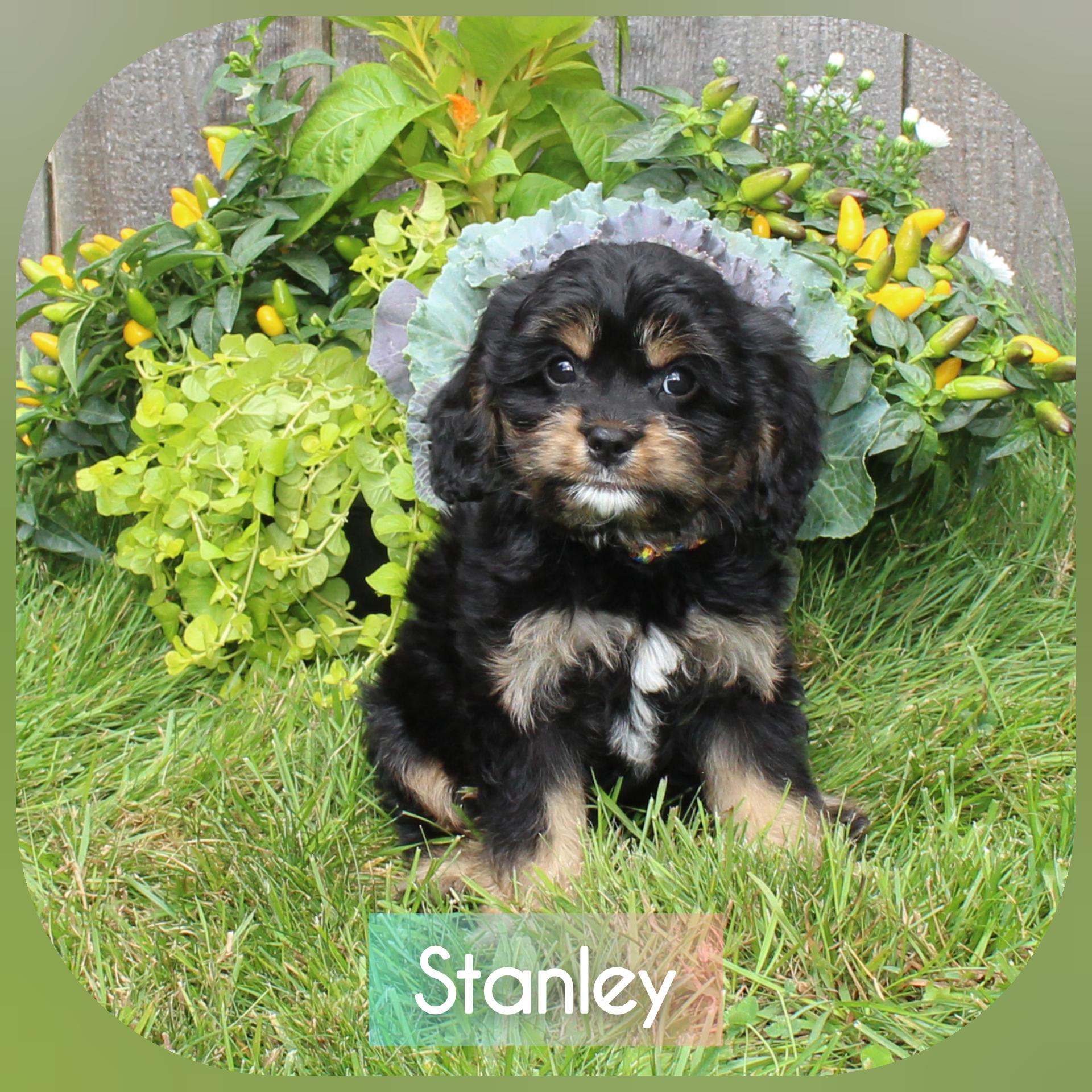 """Stanley"" -- Rainbow Collar"
