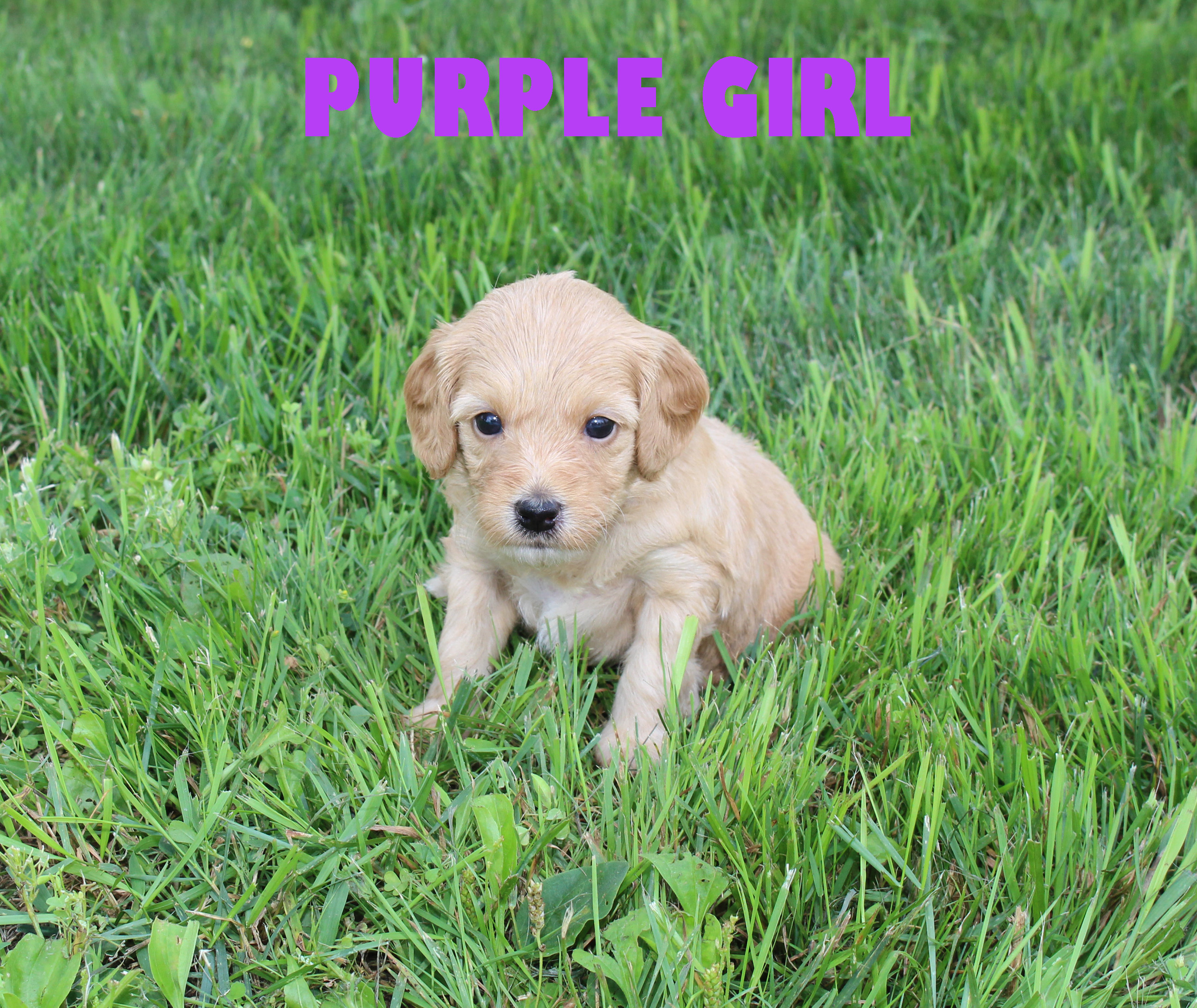 Purple GIRL -- 4 weeks old