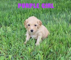 Purple GIRL -- 4 weeks old