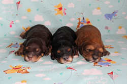 Holly and Cabello's 2018 Litter