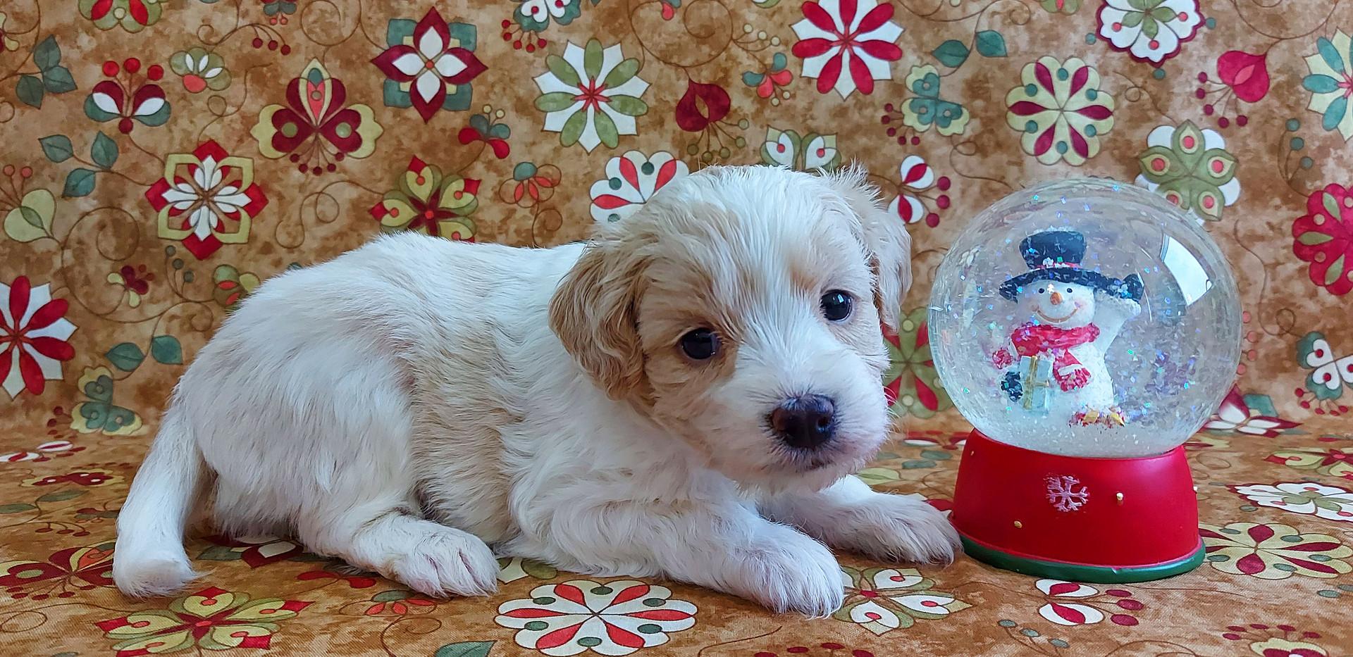 Puppy #1 -- GIRL