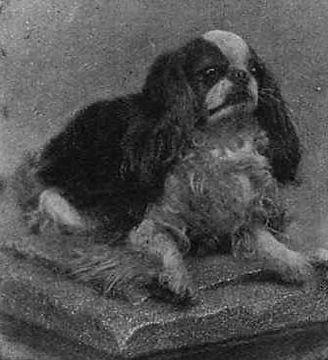 Blenheim_Spaniel_1903.jpg
