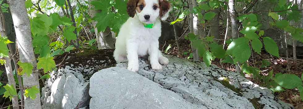 Zuko -- 8 weeks old