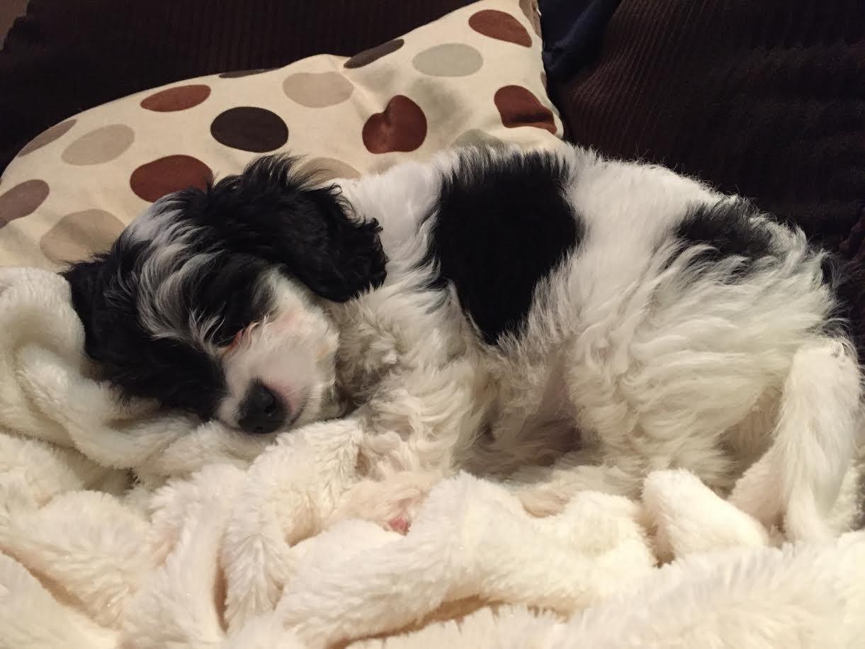 Maisie -- Nov. 2016
