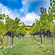 Vineyard Design, construction and management