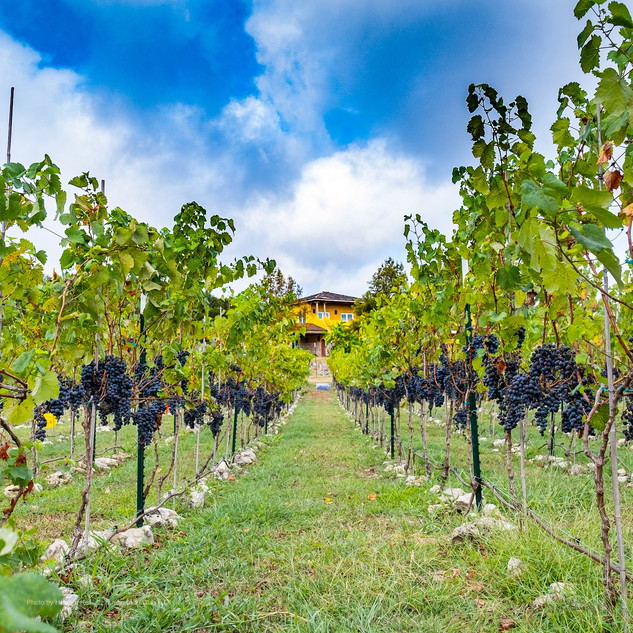 Vineyard Design, construction and management