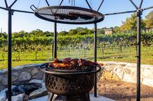 vinyard harvest 2020