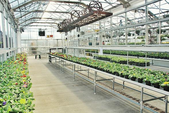 freshlight für pflanzen