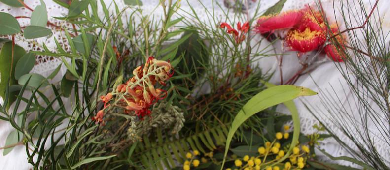 Cultural Awareness of Native Plants