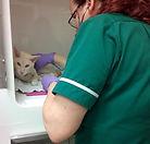 Feline pulse rate 4.jpg
