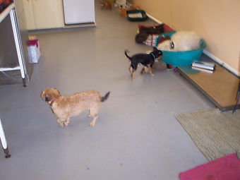 PACT animal sanctuary