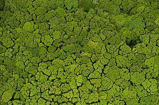 rainforest mosaic