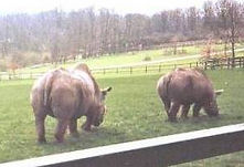 zoo animal welfare Rhino