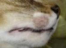 ringworm cats 2.JPG