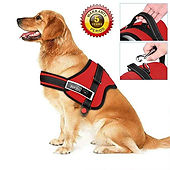 walking harness
