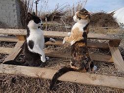 feline behaviour course