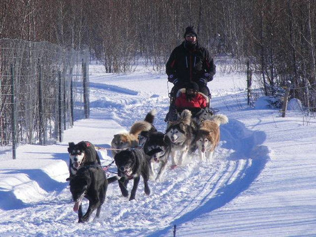 Cochrane Company Offers Dogsled Tours!