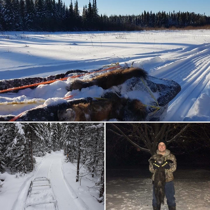 Experience A Working Trapline In Cochrane!