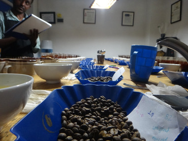 Cupping Session at BNT Coffee- Ethiopia