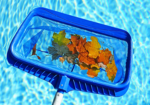 Manual Pool Skimmer Cleaning removing leaf debris in pool