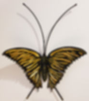 Butterfly Yellow.jpg