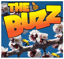 The Buzz.png
