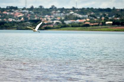 Garça_sobrevoa_o_lago.jpg