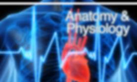 anatomy.jpg