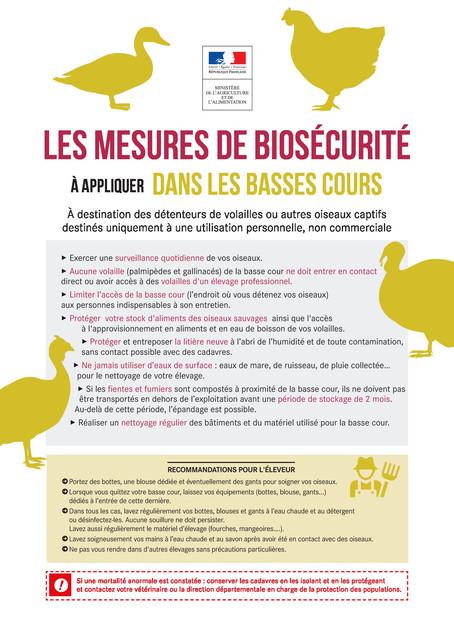 Foyer d'Influenza aviaire