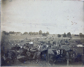 Rowland Cattle at the Hopkins Lot (385) Pooler Rd and East De Kalb Road (albumen print, circa, 1875)