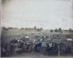 Rowland Cattle at the Hopkins Lot (385) Pooler Rd and East De Kalb Road (albumen print, circa, 1875)