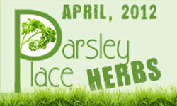 Parsley Place Herbs