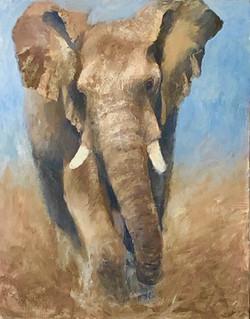 Elephant, la charge
