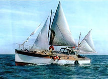 Sea Mew 1.jpg