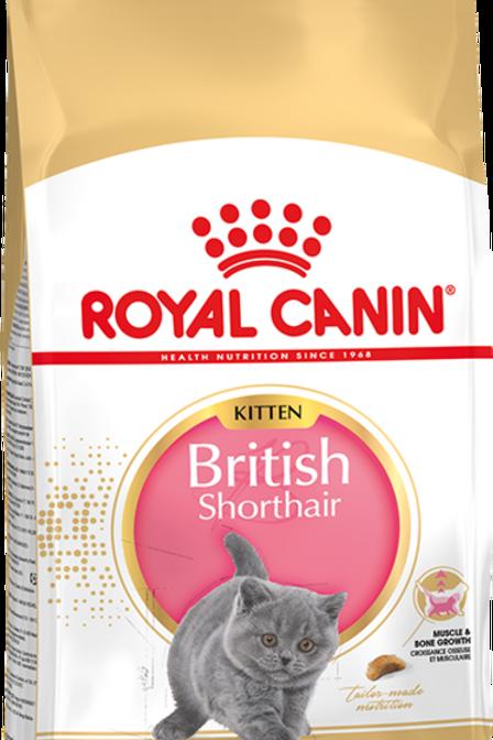 Сухой корм RC для британских короткошерстных котят до 12 месяцев