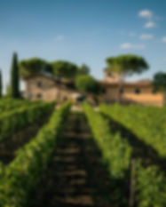 viticcio-vineyards.jpg