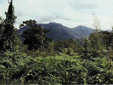 Africa's Journey on REDD+ and Bold Vision towards Implementation