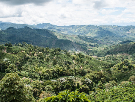 Two initiatives, one common goal How REDD+ and FLEGT synergies put governance at the center of the s