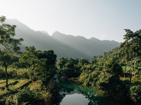 Vietnam after nine years of REDD+ Readiness