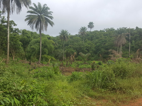 REDD+: A Catalyst for Land Use Planning in Liberia