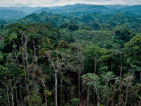 A Pioneer and Testing Lab: DRC's Complex REDD+ Path
