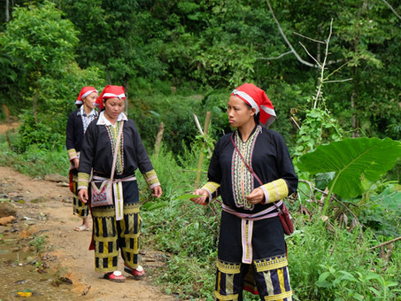 Reflecting on the linkages between REDD+, Forest Tenure and Indigenous Peoples' Rights